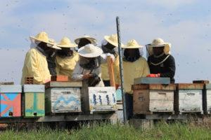 I ragazzi di Bee My Job al lavoro