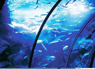 L'Acquario Civico